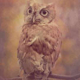 Chris Scroggins - Screech Owl 3