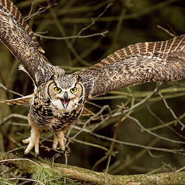 Pat Eisenberger - Screeming Owl
