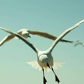Marissa Meiring - sea birds