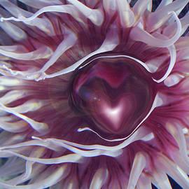 Linda Sannuti - Sea Heart