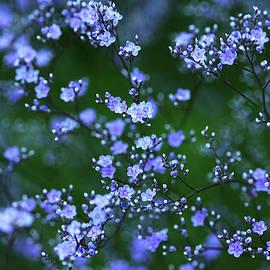 Debbie Oppermann - Sea Lavender