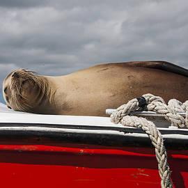 Sea Lion Decorates Boat