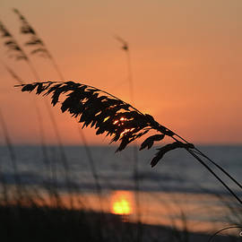 Gordon Mooneyhan - Sea Oats at Sunrise