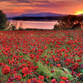 Sea of poppies. Sunset at the lake by Guido Montanes Castillo