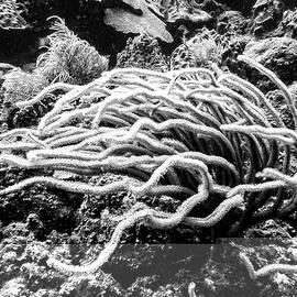 Sea Rods In Movement by Perla Copernik
