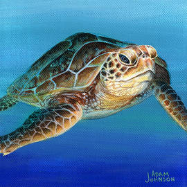 Sea Turtle 1 of 3 by Adam Johnson