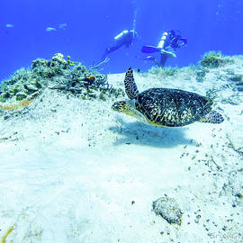Sea Turtle Swim by Erich Grant