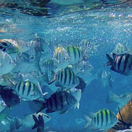 Sea Turtle Fish and OH MY... by David Zanzinger