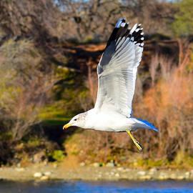 Alan C Wade - Seagull - 1