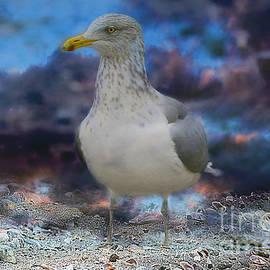 Linda Troski - Seagull and the Seashells