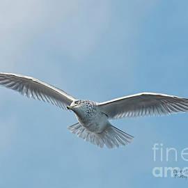 Seagull Blue Sky by Deborah Benoit