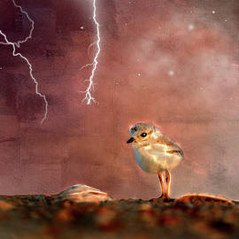 Ericamaxine Price - Seagull Chick in Lightning Storm