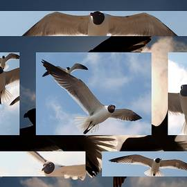 James Granberry - Seagull Collage I