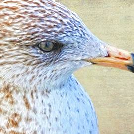 Seagull Freckles by Alice Gipson