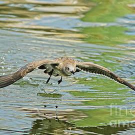 Seagull Fishing by Deborah Benoit