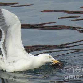 Nili Tochner - Seagull Into Fishing