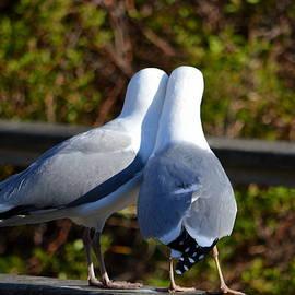 Seagull Love by Dianne Cowen