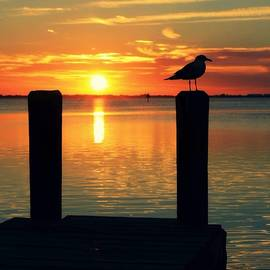 Krystal Zeogas - Seagull on the pier