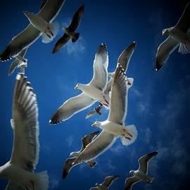 Seagulls Above by John McManus