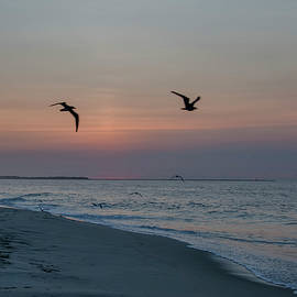 Bill Cannon - Seagulls at Sunrise - Cape May New Jersey