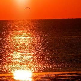 Seagulls Flying Red Golden Sunset by Belinda Lee