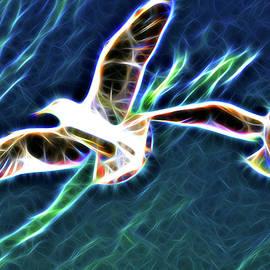 Colin Hunt - 10957 Seagulls In Flight #003 - Neon