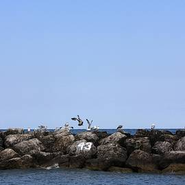 Gothicrow Images - Seagulls On Forty Three