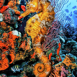 Debra and Dave Vanderlaan - Seahorse at a Magical Reef in Striking Detail