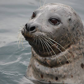 Richard Andrews - Seal of Approval