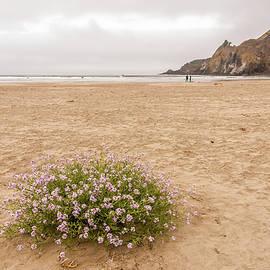 Searocket Seascape by Marv Vandehey