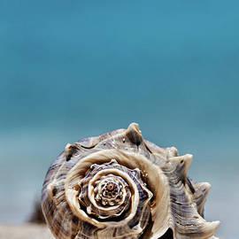 Evgeniya Lystsova - Seashell by Seashore