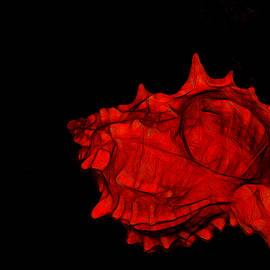 Lynda Lehmann - Seashell Meridian 43
