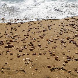 Georgia Mizuleva - Seashells and Footsteps - Lets Go to the Beach