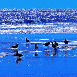 Ira Shander - Seashore Serenade
