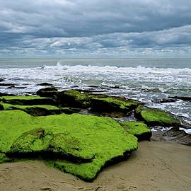 Seaside by Ralph Jones
