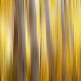 Beve Brown-Clark Photography - Seasoned