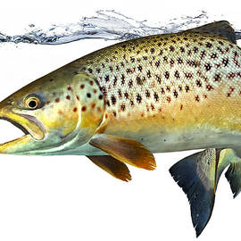 Anders Ovesen - Seatrout