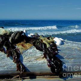 Seaweed Driftwood Shells And The Sea by Delores Malcomson