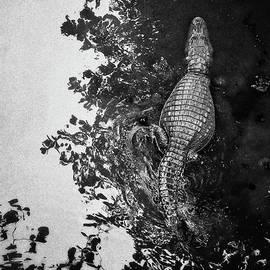 See You Later... #crocodile #alligator