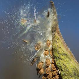 Alana Ranney - Seeds