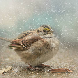 Jai Johnson - Seeking Warmth Songbird Art