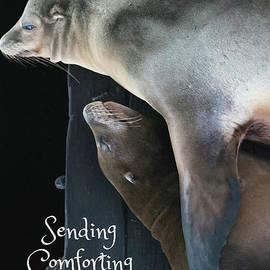 Carol Groenen - Sending Comforting Cuddles