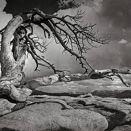 Sentinel Dome Tree Yosemite by Mike Penney