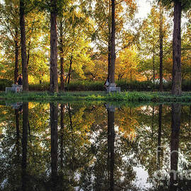 Aaron Choi - Seoul forest autumn reflections