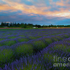 Sequim Lavender Sunset - Mike Dawson