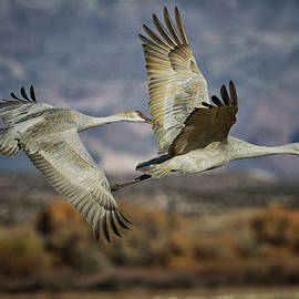 Serendipitous Crane  duet in the soccoro skies  by Ruth Jolly