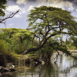 Timothy Hacker - Serengeti Scenery