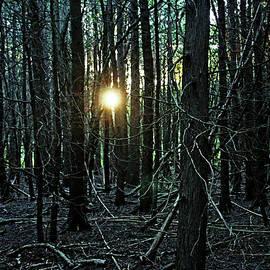 Debbie Oppermann - Setting Sun In The Woods
