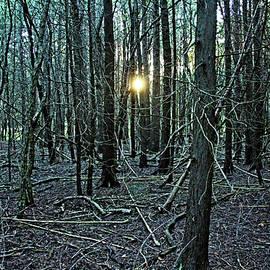 Debbie Oppermann - Setting Sun In The Woods I