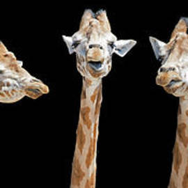 Seven giraffes with different facial expressions - Jane Rix
